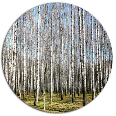 Designart Sunny November Day in Birch Grow Disc Forest Metal Circle Wall Arts