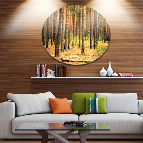 Designart Beautiful Pine Forest at Sunset Disc Forest Metal Circle Wall Arts