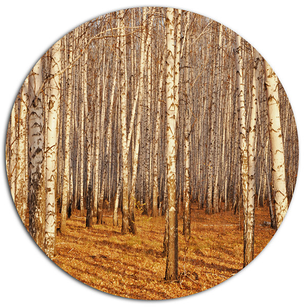 Designart Dense Birch Forest in the Fall Disc Forest Metal Circle Wall Art