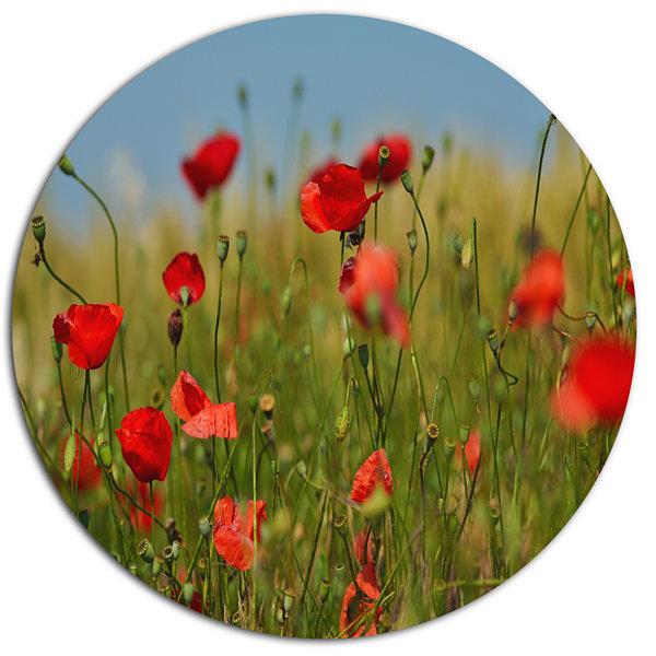 Designart Wild Poppy Flowers in Green Garden DiscFloral Metal Circle ...