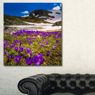 Designart Blooming Crocus Flowers In Rila Mountains Canvas Art