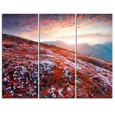 Designart Blooming Fields In Carpathian 3-pc. Canvas Art