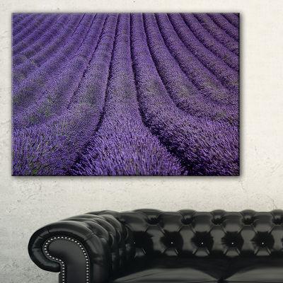 Designart Blooming Lavender Flower Texture Canvas Art