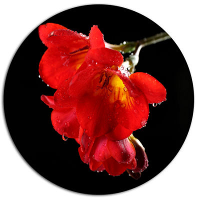 Designart Freesia Flower on Black Background DiscLarge Floral Metal Artwork