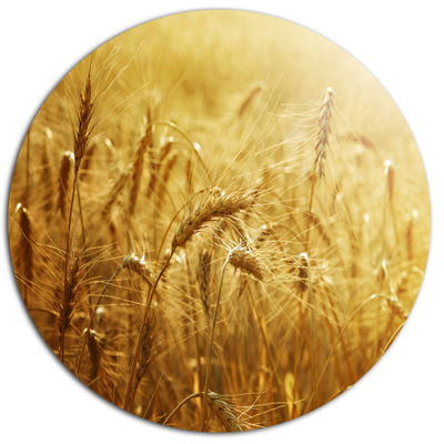 Designart Golden Wheat Field Disc Large LandscapeMetal Circle Wall Art