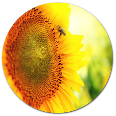 Designart Sunflower Blooming on Field Disc Large Animal Metal Circle Wall Art