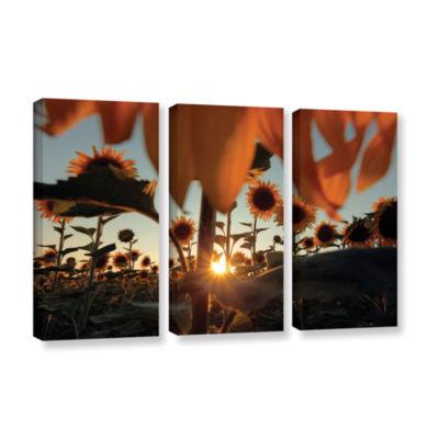 Brushstone Sunflower Field 3-pc. Gallery Wrapped Canvas Wall Art