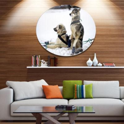 Designart Large Sled Dogs Relaxing Disc OversizedAnimal Wall Art