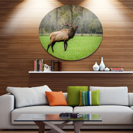 Designart Trophy Bull Elk in Green Grassland DiscLarge Animal Metal Artwork