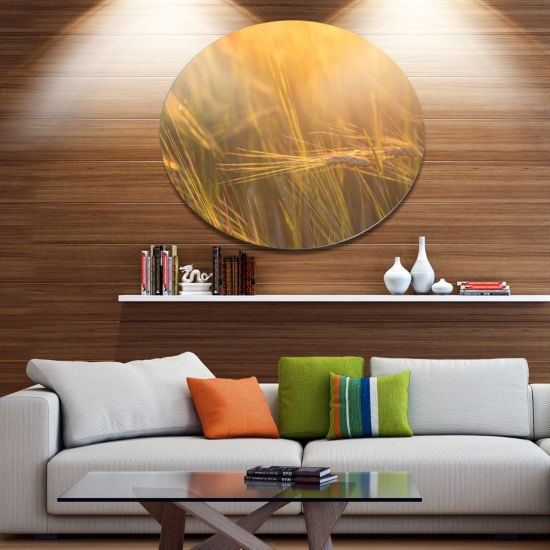 Designart Wheat Field Close up at Sunset Disc Large Landscape Metal Circle Wall Art