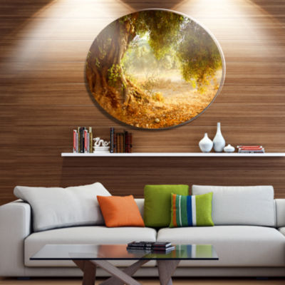 Designart Beautiful Old Olive Tree Disc Large Landscape Metal Circle Wall Art