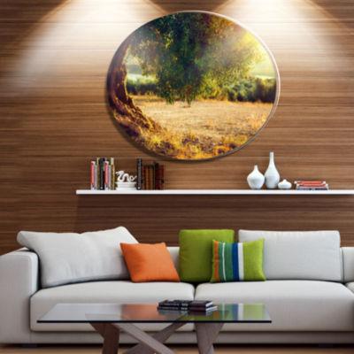 Designart Stunning Olive Trees at Sunset Disc Large Landscape Metal Circle Wall Art