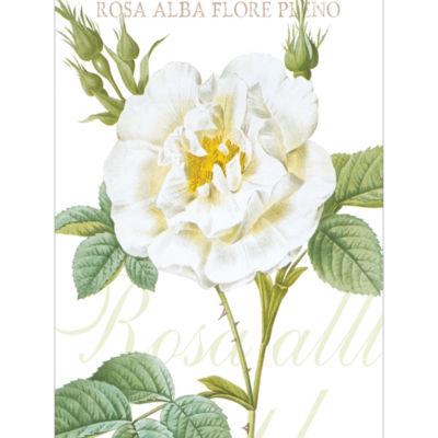 Rosa Alba Canvas Art
