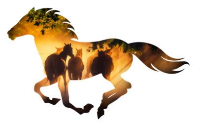 Misty Morning Running Horse