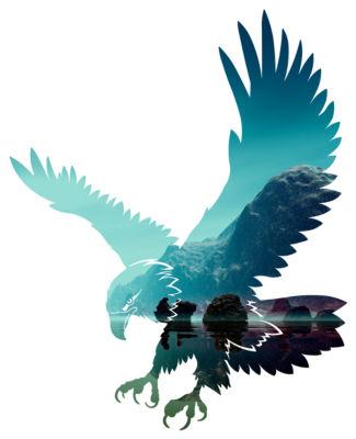 Reflections Eagle