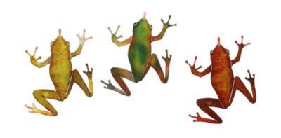 Metal Wall Art Frogs 3 Piece Set