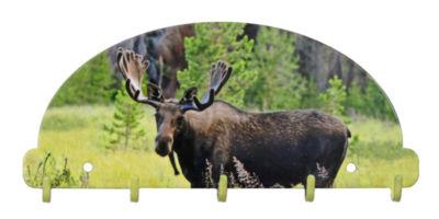 Key Rack Organizer Moose