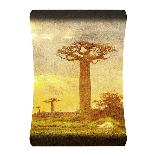 Metal Wall Art Home Decor Baobabs 36x24 HD Curve
