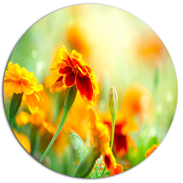 Design Art Orange Tagetes Marigold Flowers Disc Floral Circle Metal ...
