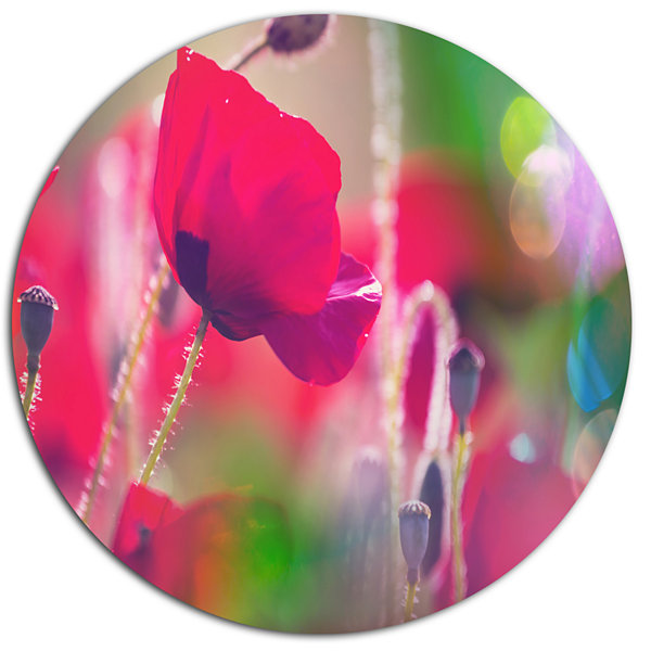 Design Art Close Up View of Red Poppy Flowers Floral Oversized Circle Metal Artwork