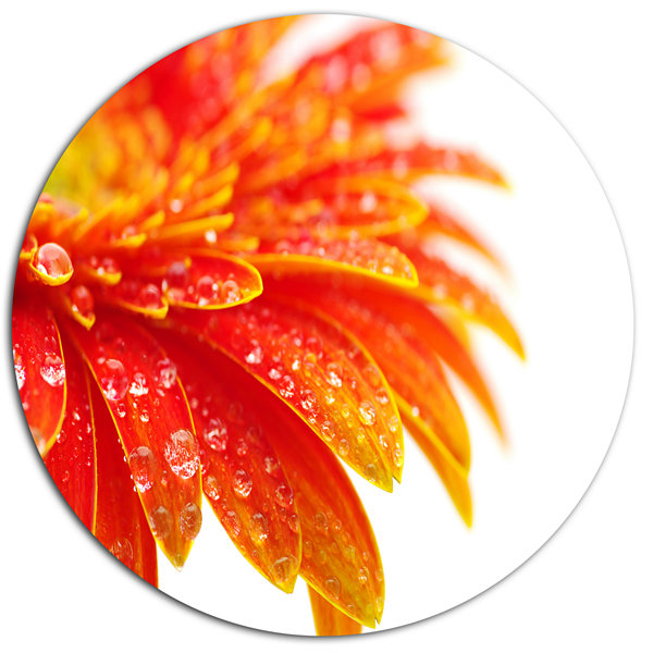 Design Art Orange Gerbera with Raindrops Disc Floral Circle Metal Wall Decor