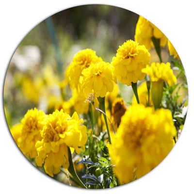 Design Art Bright Yellow Marigold Flowers Disc Floral Circle Metal Wall Decor