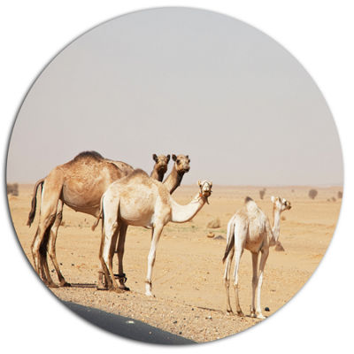 Design Art Camels in Sunny Sahara Desert Disc Animal Circle Metal Wall Decor