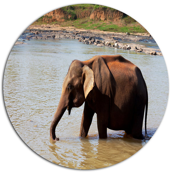Design Art Elephant in Water in Sri Lanka Extra Large African Oversized Circle Metal Artwork
