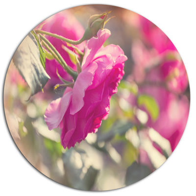 Design Art Beautiful Pink Rose Flowers Floral Oversized Circle Metal Artwork