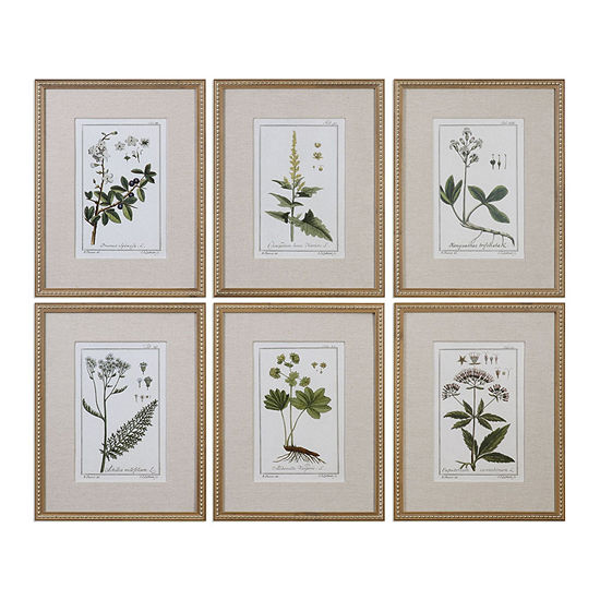 Floral Botanical Study Art Set Of 6