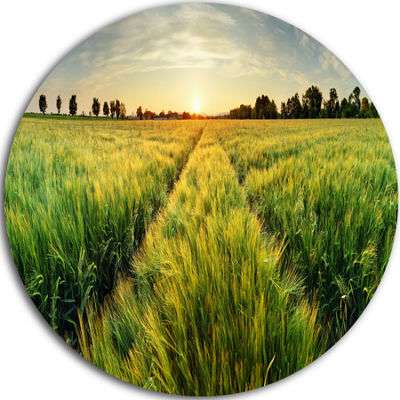 Design Art Green Wheat Field at Sunset Circle Metal Wall Art