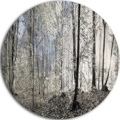 Design Art Dark Morning in Forest Panorama Landscape Round Circle Metal Wall Art