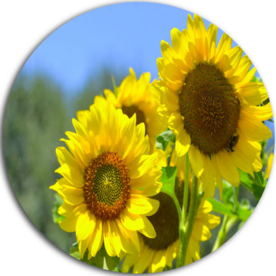 Design Art Beautiful Sunflowers View Floral RoundCircle Metal Wall Art