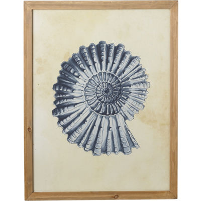 Framed Nautilus Shell Wood Art
