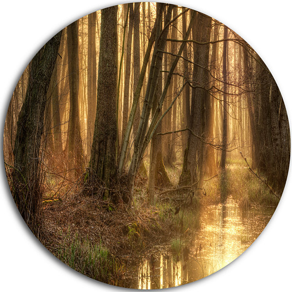 Design Art Golden Morning in Dense Forest Landscape Photography Circle Metal Wall Art