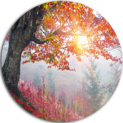 Design Art Morning in Misty Red Forest Landscape Photo Circle Metal Wall Art