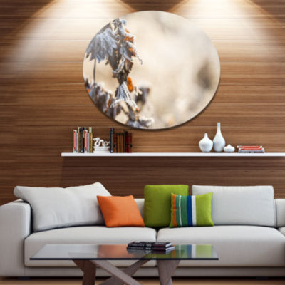 Design Art Beautiful Grass Covered with Ice FloralMetal Circle Wall Art
