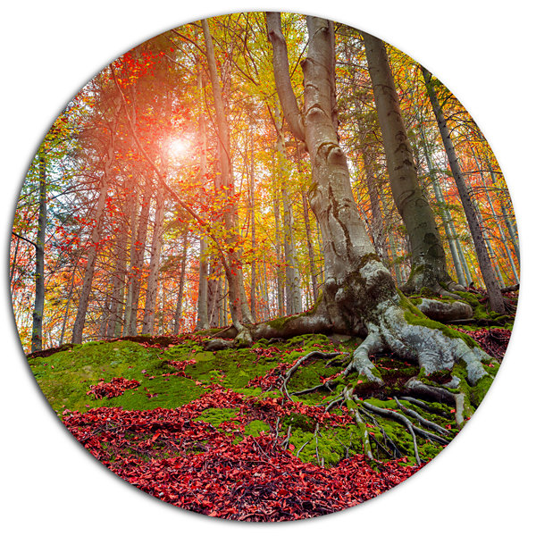 Design Art Colorful Autumn Trees in Forest Large Landscape Metal Circle Wall Art