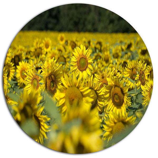 Design Art Bright Yellow Sunflowers Field Floral Metal Circle Wall ...