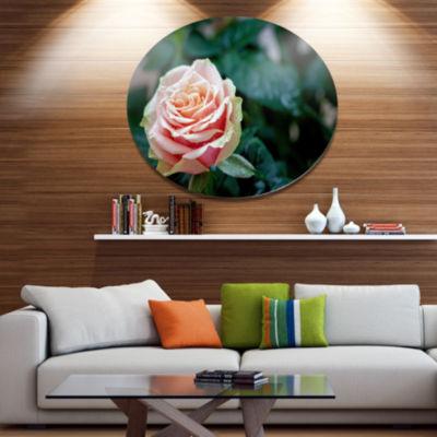 Design Art Red and Orange Rose Flower Close Up Disc Floral Circle Metal Wall Decor