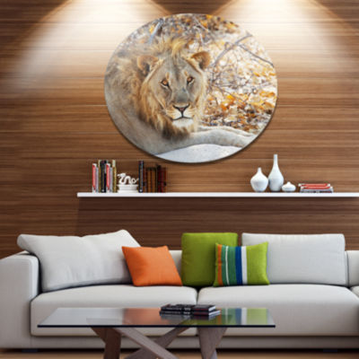 Design Art Solitary Lion Taking Rest in Forest African Oversized Circle Metal Artwork