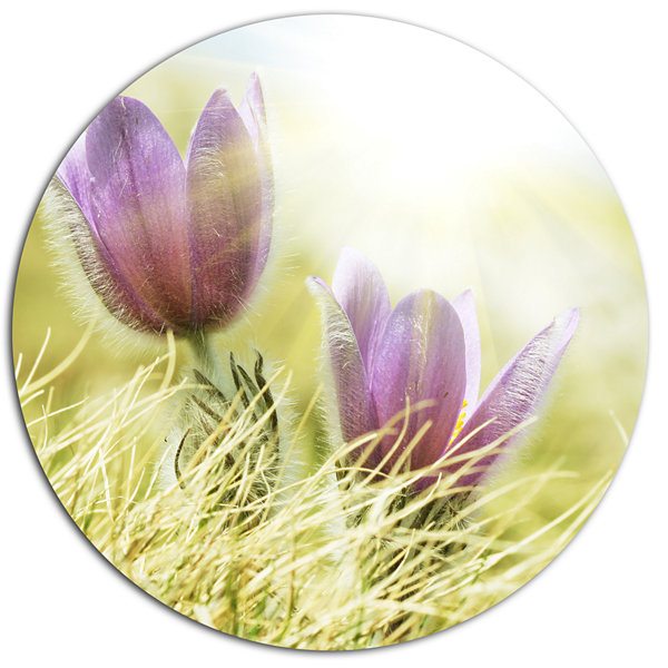 Design Art Large Purple Flowers in Green Grass Disc Floral Circle ...