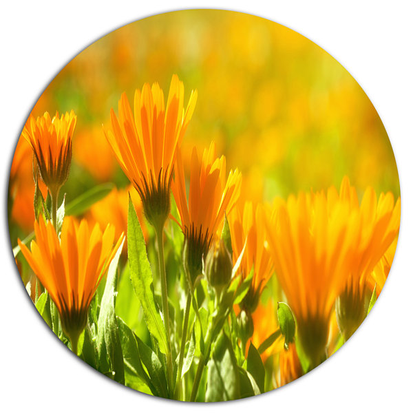 Design Art Orange Marigold Flowers in Sunlight Disc Floral Circle Metal Wall Decor