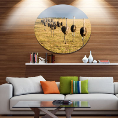 Design Art Ostriches Walking in South Africa African Metal Circle Wall Art