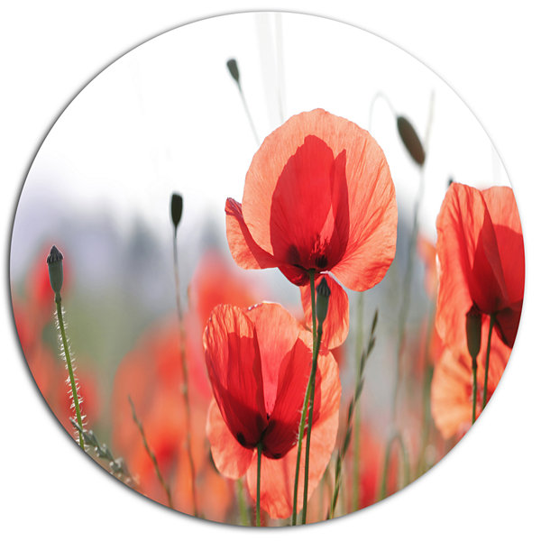 Design Art Soft Poppy Flowers Petals View Floral Metal Circle Wall Art