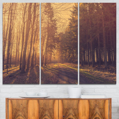 Designart Pine Tree Forest By Road 3-pc. Canvas Art