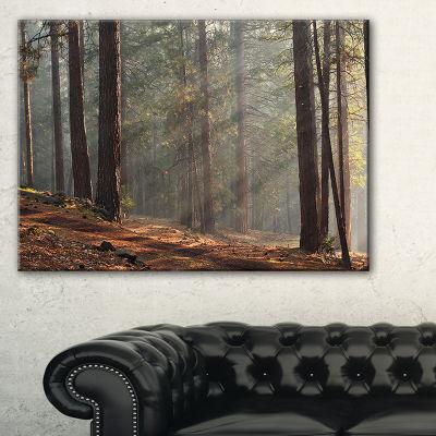 Designart Rays Of Sun In Dense Forest Canvas Art