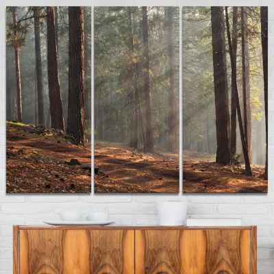 Designart Rays Of Sun In Dense Forest 3-pc. Canvas Art