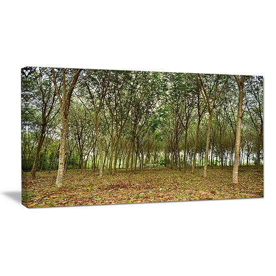 Designart Rubber Tree Plantation During Midday Canvas Art