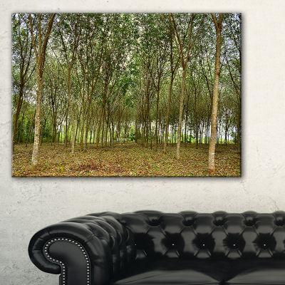 Designart Rubber Tree Plantation During Midday Canvas Art